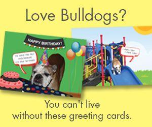 Dougie Rocks Cards