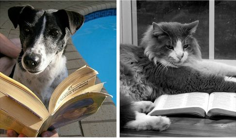 literary-dogs